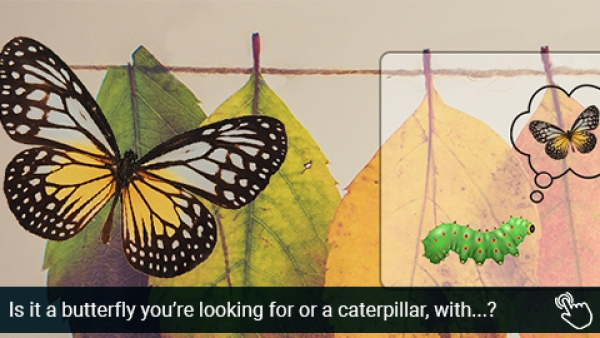 Is it a butterfly you're looking for, or a caterpillar with an extra leg or two?